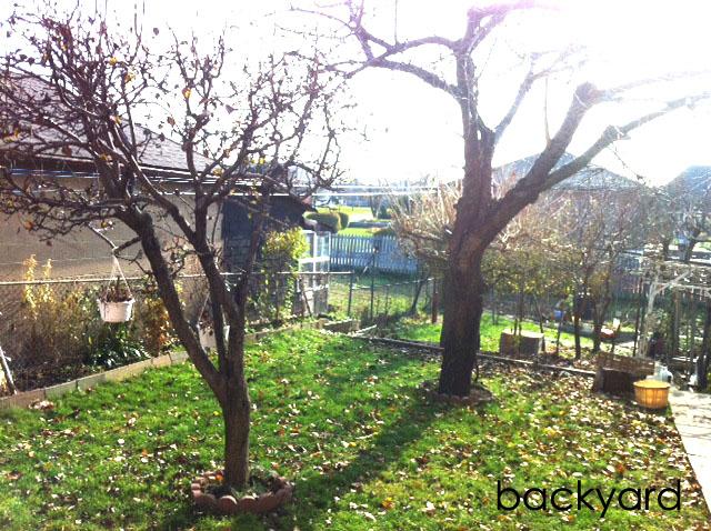 Backyard copy